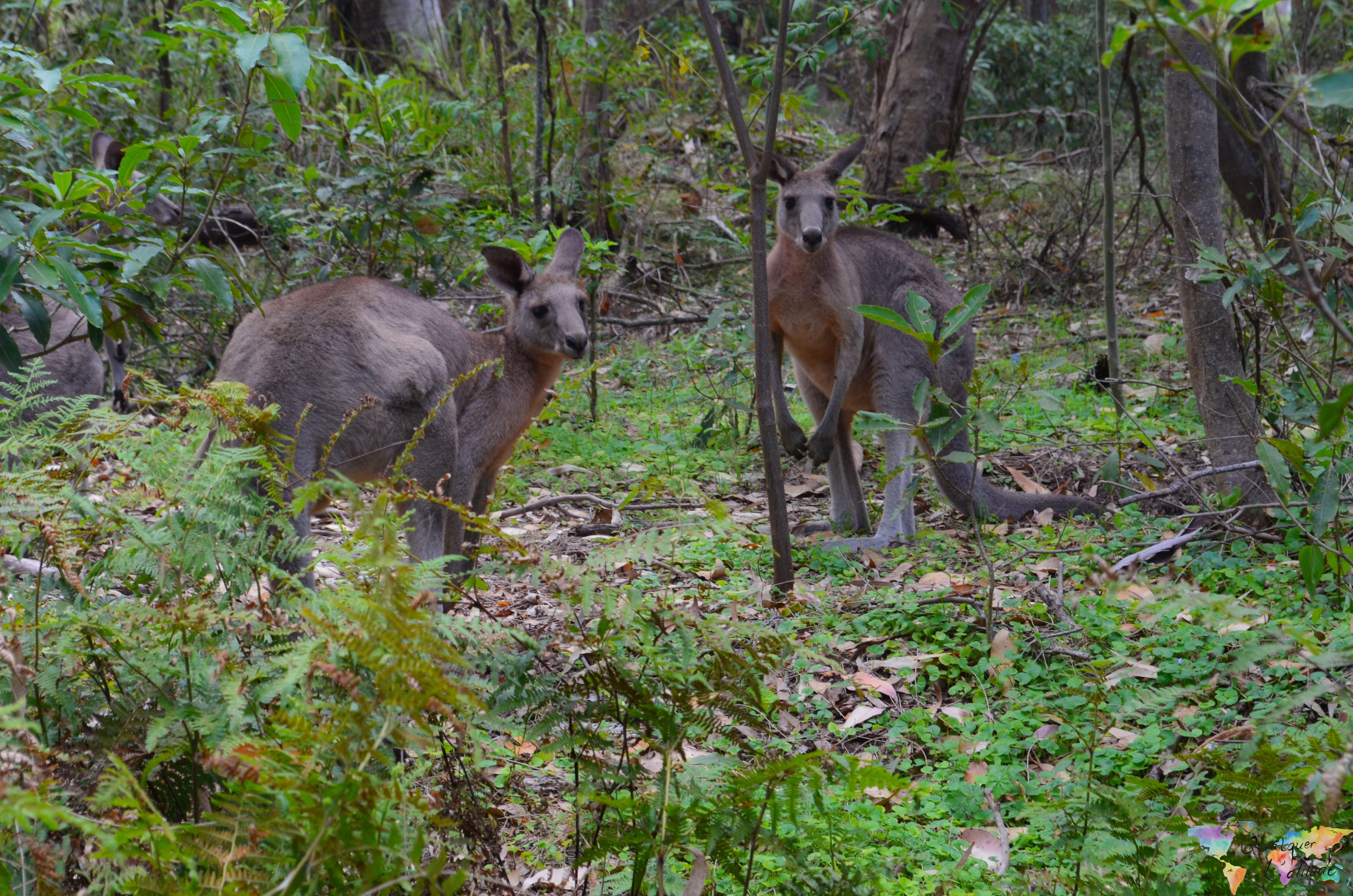 Canguru (1 of 10)